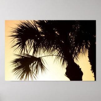 Poster Arbre de Palmetto, lever de soleil, la Floride