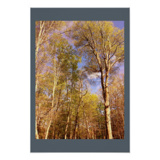 Poster Arbres