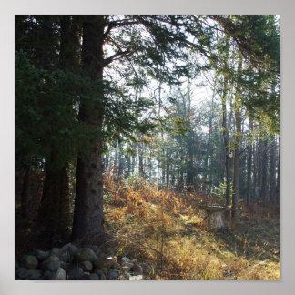 Poster Arbres dans un matin tôt d'automne