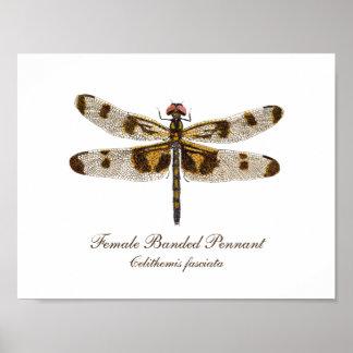 Poster Art de libellule de fanion réuni par femelle