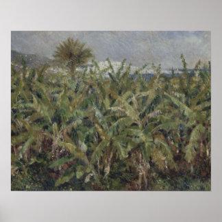 Poster Auguste Renoir - champ des bananiers