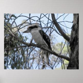 Poster Australien Kookaburra