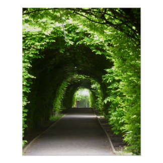 Poster Axe ombragé de jardin botanique