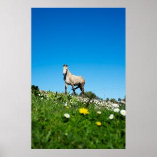 Poster beau cheval irlandais dans un domaine