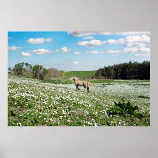 Poster beau poney irlandais dans un domaine