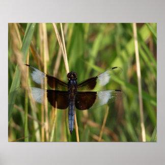 Poster Beauté de libellule - insecte de nature
