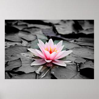Poster Bel art rose de zen de nénuphar de fleur de Lotus