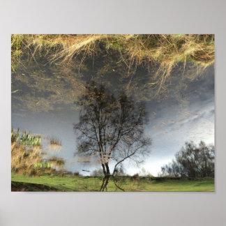 Poster Belle affiche d'arbre de photographie de réflexion
