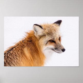 Poster Belle affiche de Fox de Sly