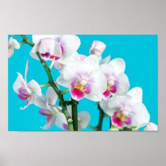 Poster Branche de l'orchidée blanche sur la photographie
