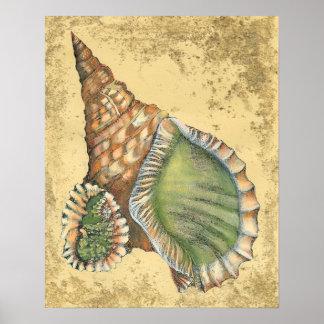 Poster Brown et coquillage vert