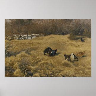 Poster Bruno Liljefors - déploiement de grouse noire