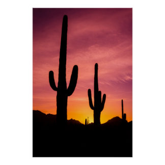 Poster Cactus de Saguaro au lever de soleil, Arizona