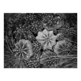 Poster Cactus noir et blanc de photographie