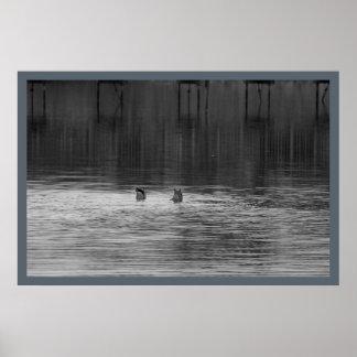 Poster Canards au refuge