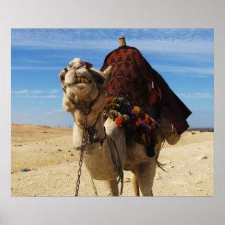 Poster Chameau en photo animale mignonne de voyage de