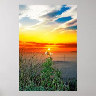 Poster chardons grands sur le coucher du soleil