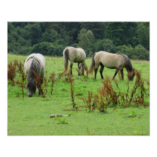 Poster Chevaux