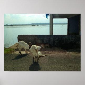 Poster Chèvres sur une balade