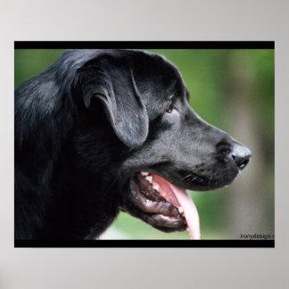 Poster Chien noir de Labrador