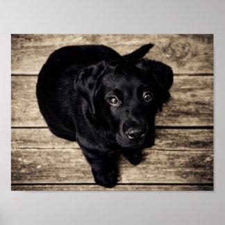 Poster Chiot noir de Labrador