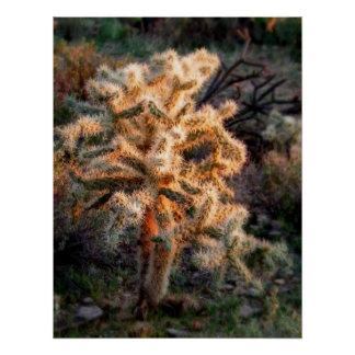 Poster Cholla rougeoyant