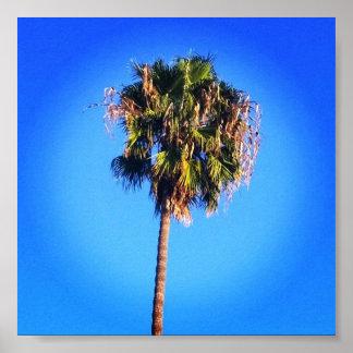 Poster Ciel bleu de palmier
