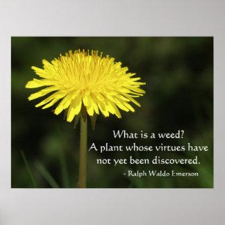 Poster Citation de mauvaise herbe de Ralph Waldo Emerson