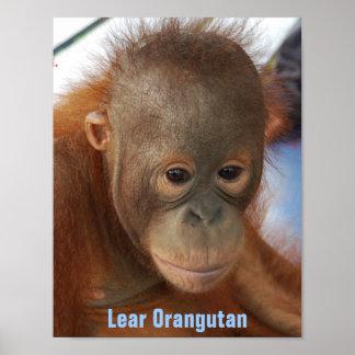 Poster Club de fan d'orang-outan de Lear