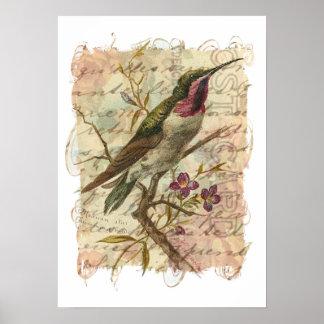 Poster Colibri vintage