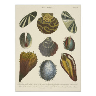 Poster Collection de conchyliologie