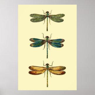 Poster Collection d'insectes de libellule