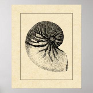 Poster Conque noire et blanche vintage Shell