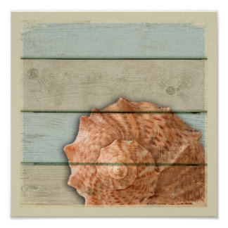 Poster Conque Shell