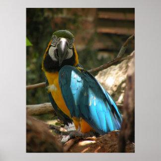 Poster Copie colorée de perroquet