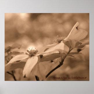 Poster Copie d'affiche de photographie de fleur de