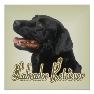 Poster Copie d'art de labrador retriever