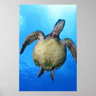 Poster Copie hawaïenne de tortue de mer