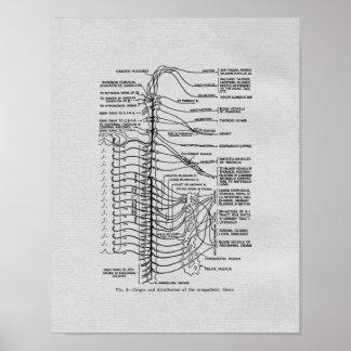 Poster Copie vintage de nerfs rachidiens de chiropractie