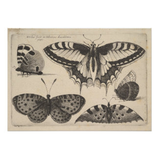 Poster Copie vintage d'insecte de papillon de machaon