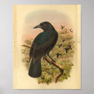 Poster Copie vintage d'oiseau de corneille de paradis