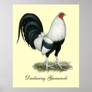 Poster Coq de combat argenté de Duckwing