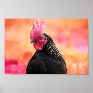 Poster Coq noir