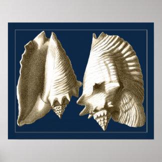 Poster Coquillages de conque de sépia