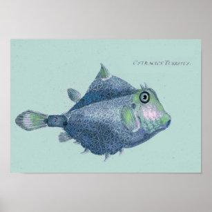 Poster Côtier - poissons tropicaux vintages