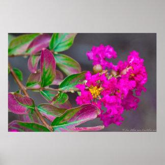 Poster Crêpe le Myrte rose vibrante en affiche de fleur