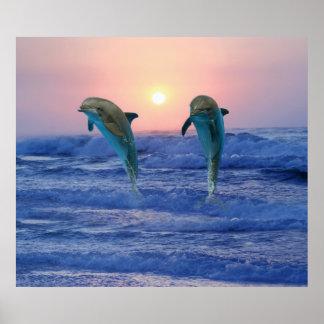 Poster Dauphin de Bottlenose au lever de soleil