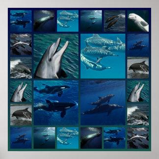 Poster Dauphins et collage de baleines
