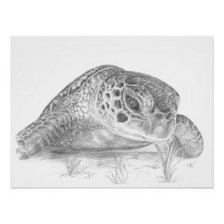 Poster Dessin de tortue de mer verte