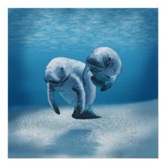 Poster Deux lamantins nageant
